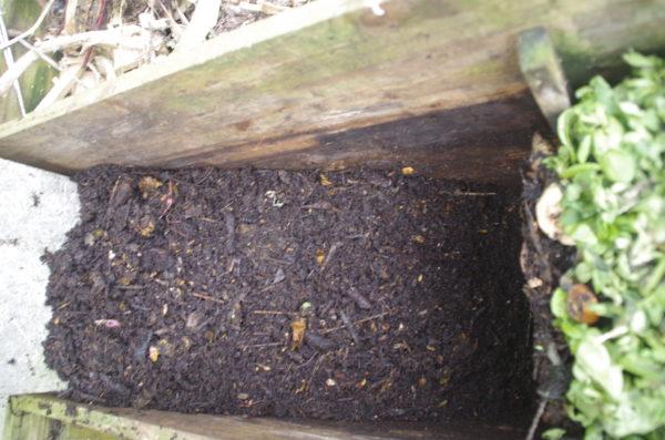 Mon mini bac à compost : retour d'expérience