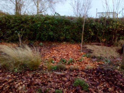 Jardin de Sitham, Nord