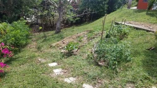 Jardin d'OTR, St-Lucie, Caraïbes